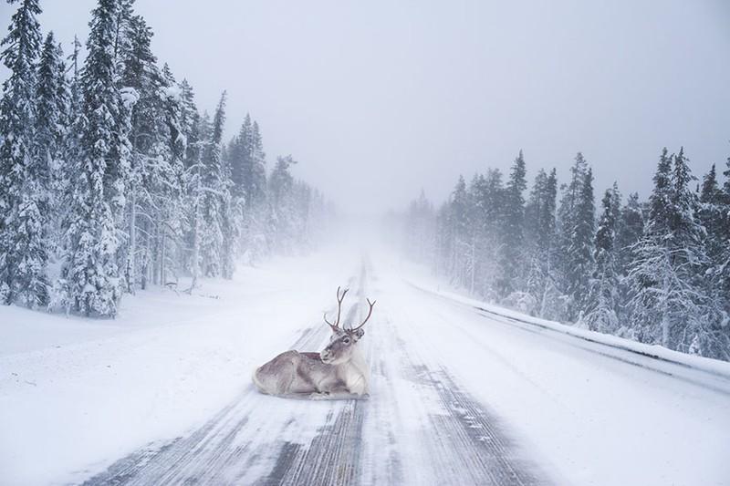 Giáng sinh ở quê hương ông già Noel ra sao? - ảnh 9
