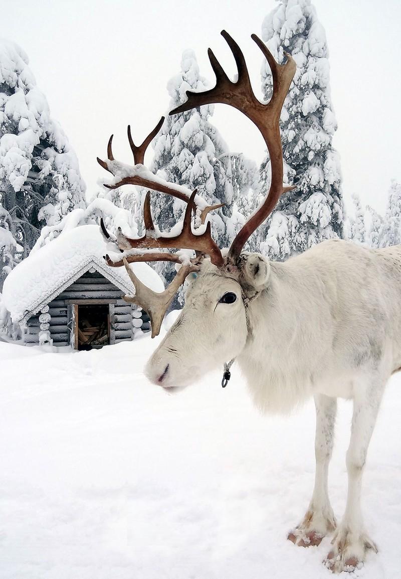 Giáng sinh ở quê hương ông già Noel ra sao? - ảnh 10