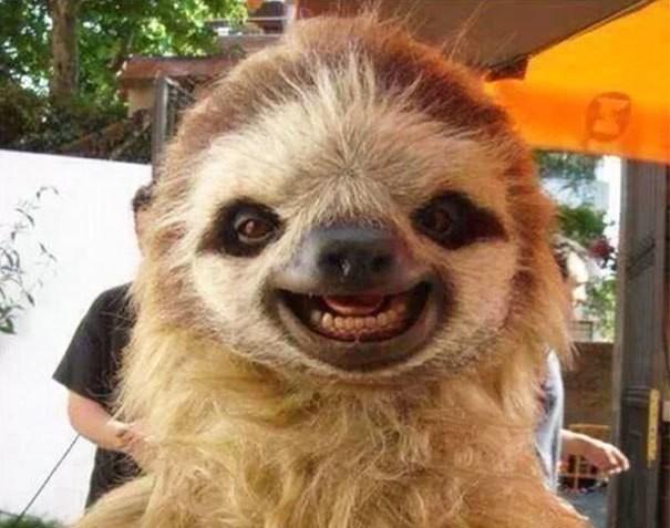Những động vật hạnh phúc nhất trên thế giới - ảnh 1