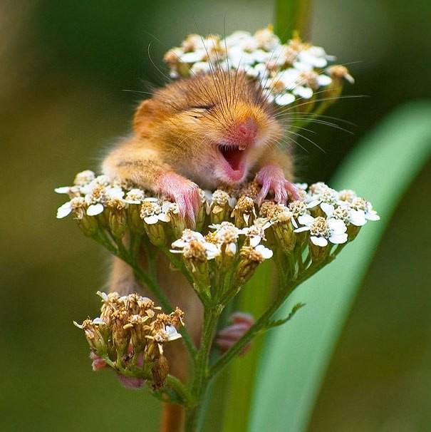 Những động vật hạnh phúc nhất trên thế giới - ảnh 3