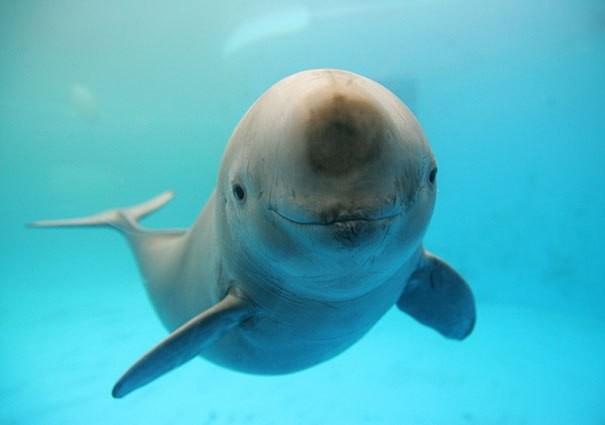 Những động vật hạnh phúc nhất trên thế giới - ảnh 7