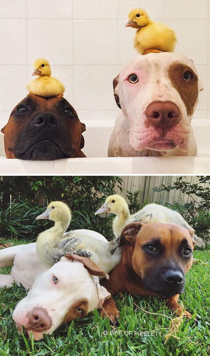Thích thú với những cặp đôi thú cưng lớn lên cùng nhau - ảnh 2