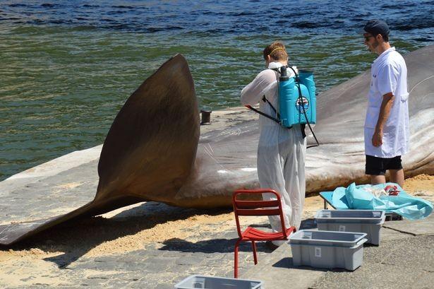 'Cá voi' bất ngờ mắc cạn giữa thủ đô Paris - ảnh 6
