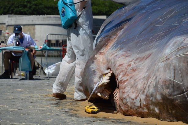 'Cá voi' bất ngờ mắc cạn giữa thủ đô Paris - ảnh 3