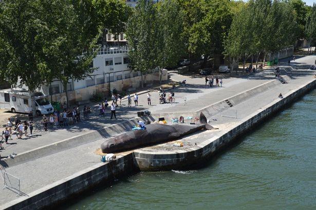 'Cá voi' bất ngờ mắc cạn giữa thủ đô Paris - ảnh 2