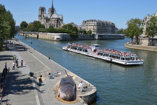 'Cá voi' bất ngờ mắc cạn giữa thủ đô Paris - ảnh 4