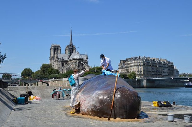 'Cá voi' bất ngờ mắc cạn giữa thủ đô Paris - ảnh 1