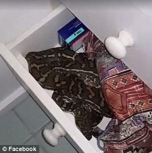 Đứng tim phát hiện trăn cuộn tròn trong phòng tắm - ảnh 1
