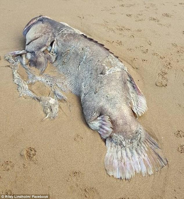 Phát hiện thủy quái khổng lồ trên bờ biển - ảnh 2