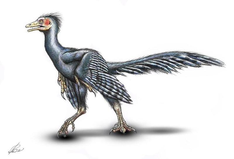 Giải mã bí ẩn loài chim cổ Archaeopteryx - ảnh 2