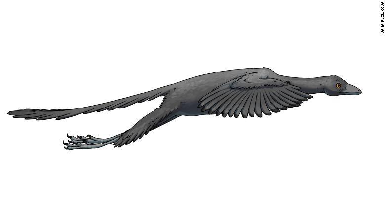 Giải mã bí ẩn loài chim cổ Archaeopteryx - ảnh 3