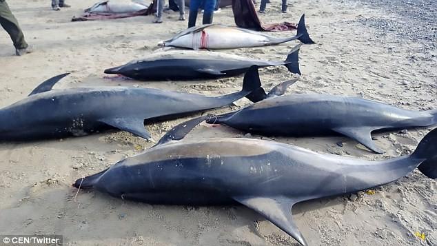Cá heo chết hàng loạt dạt vào bờ biển - ảnh 1