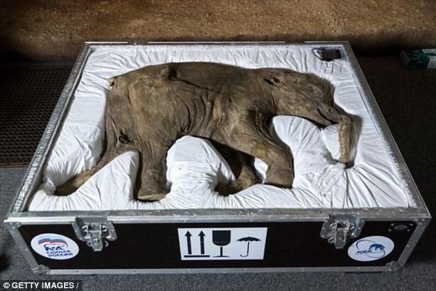 Sắp hồi sinh thành công voi ma mút? - ảnh 3