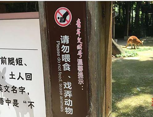 Du khách Trung Quốc ném đá làm chết kangaroo - ảnh 2