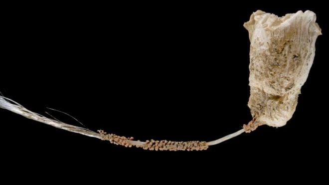 Phát hiện nhiều sinh vật biển kỳ dị ở vùng biển sâu Indonesia - ảnh 8
