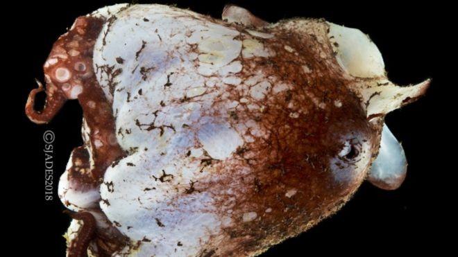 Phát hiện nhiều sinh vật biển kỳ dị ở vùng biển sâu Indonesia - ảnh 9