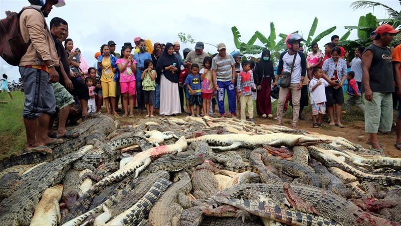 Dân làng giết sạch 292 con cá sấu để trả thù cho 1 mạng người - ảnh 1