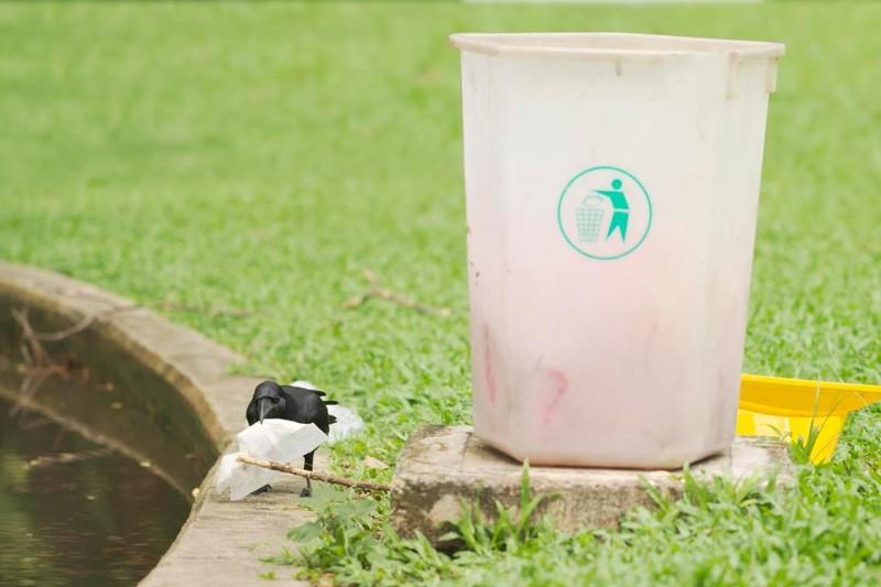 Đào tạo quạ thay người dọn rác công viên - ảnh 1