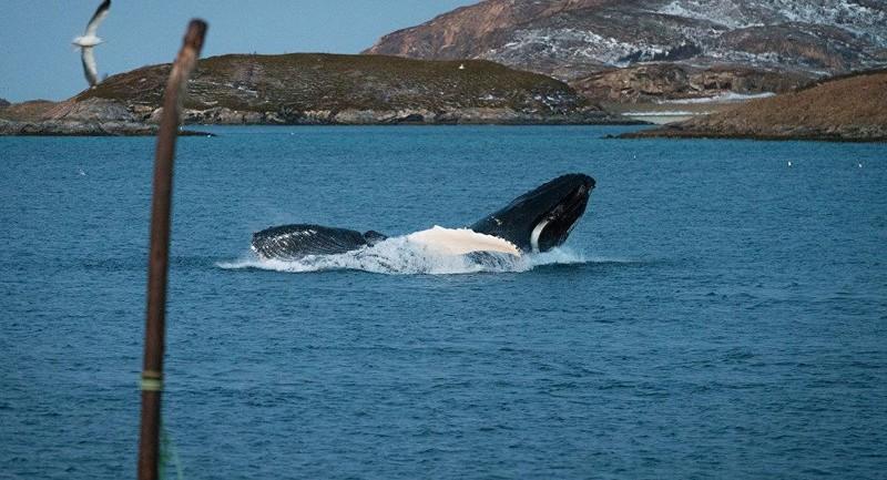 Cảm động cá voi mẹ mang theo xác con suốt 17 ngày liền - ảnh 1