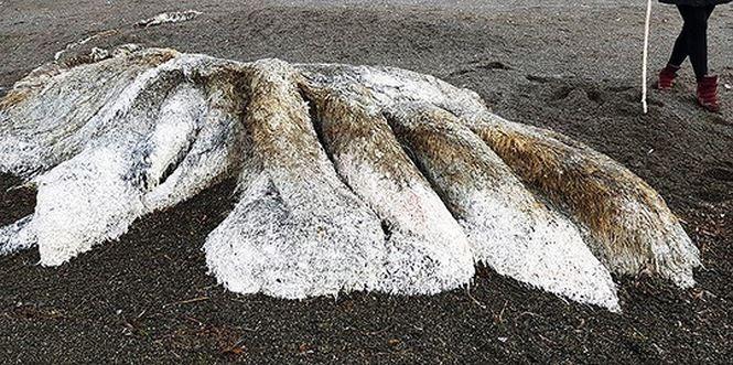 Kinh hãi phát hiện 'thủy quái' đầy lông lá dạt vào bờ biển - ảnh 2