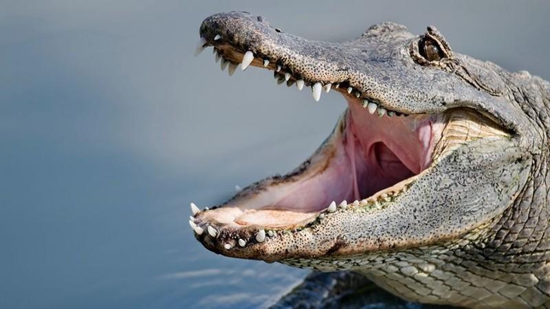 Dắt chó đi dạo, bất ngờ bị cá sấu cắn chết - ảnh 1