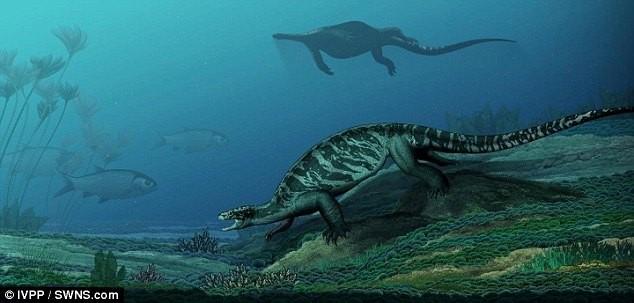 Phát hiện hóa thạch rùa tiền sử khổng lồ ở Trung Quốc - ảnh 3