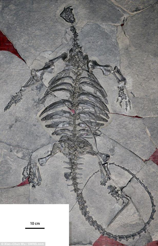 Phát hiện hóa thạch rùa tiền sử khổng lồ ở Trung Quốc - ảnh 2