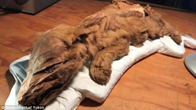 Khai quật xác ướp 2 sinh vật thời tiền sử 50.000 năm tuổi - ảnh 1