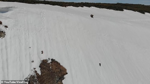 Gấu con không bỏ cuộc trước đỉnh núi tuyết gây bão mạng - ảnh 1