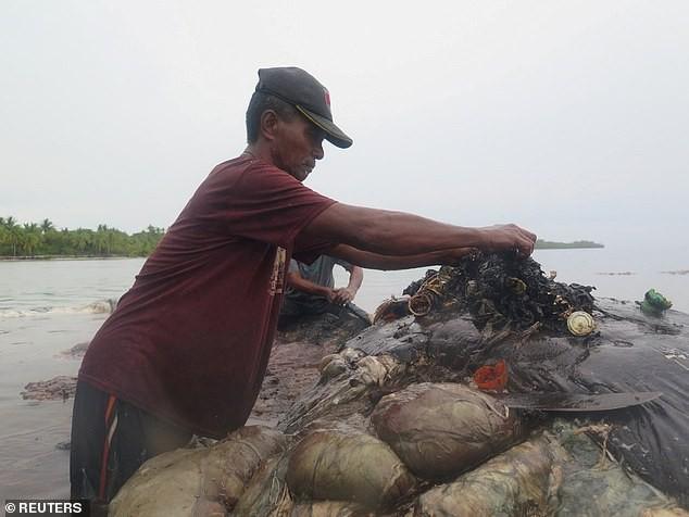 Cá voi chết sau khi nuốt quá nhiều rác thải nhựa - ảnh 2
