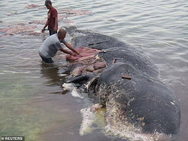Cá voi chết sau khi nuốt quá nhiều rác thải nhựa - ảnh 1