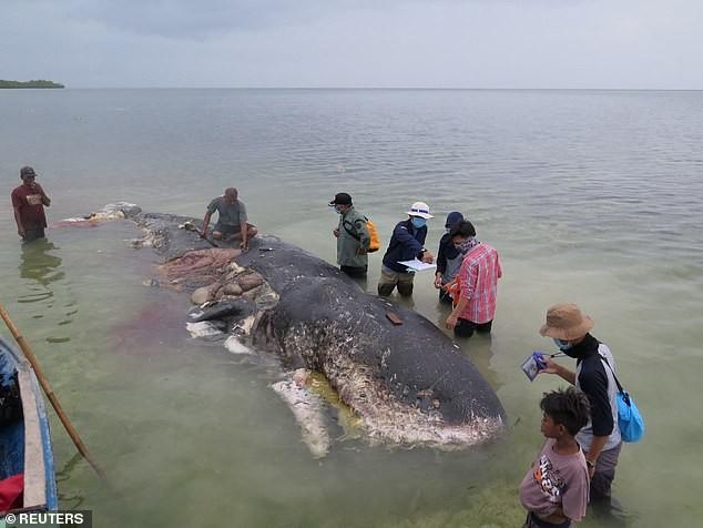 Cá voi chết sau khi nuốt quá nhiều rác thải nhựa - ảnh 3