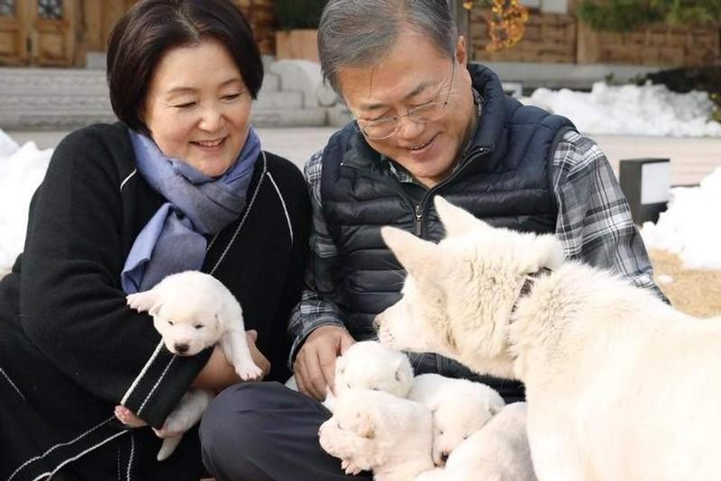 Tổng thống Hàn Quốc khoe 'quốc khuyển' ông Kim tặng sinh 6 con - ảnh 1