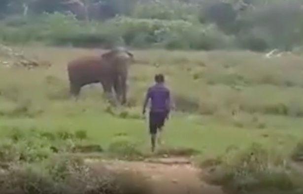 Cố thôi miên voi hoang dã, người đàn ông bị quật chết - ảnh 1