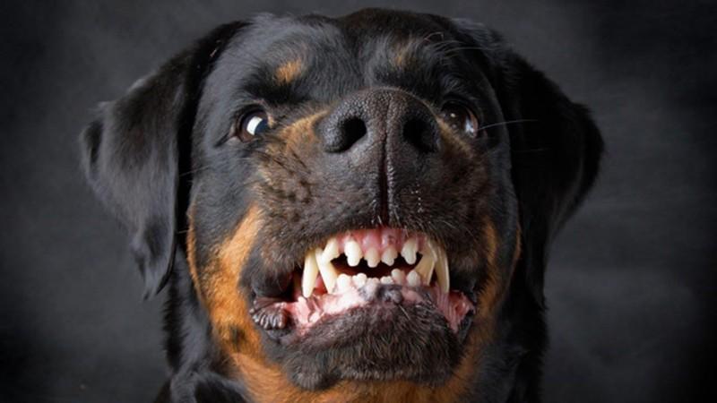 Để chó cắn chết người: Có thể lãnh 14 năm tù - ảnh 2