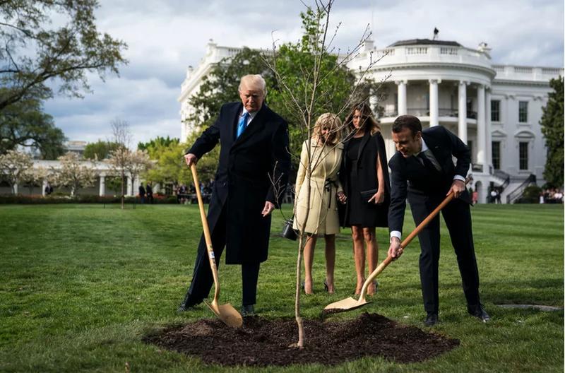 Ông Macron sẽ gửi tặng ông Trump cây sồi mới thay cây đã chết - ảnh 1