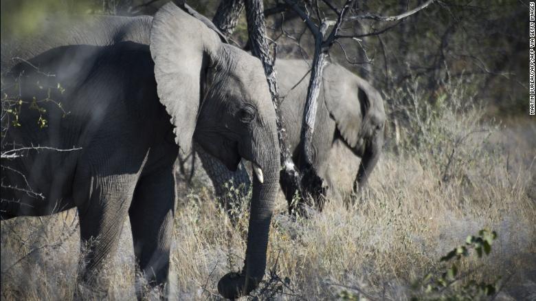 Du khách người Áo bị voi giết chết khi đi cắm trại - ảnh 1