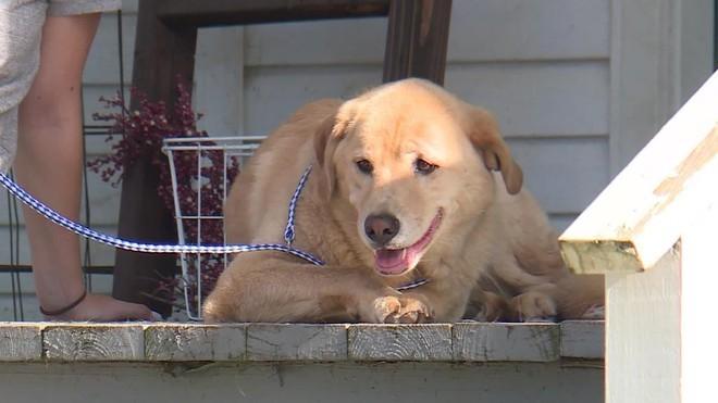 Kỳ lạ chó vượt 90 km trở về nhà cũ an toàn - ảnh 1
