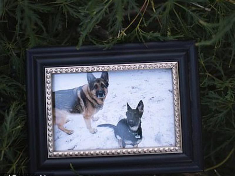 Chú chó nhiễm COVID-19 đầu tiên ở Mỹ đã chết - ảnh 1