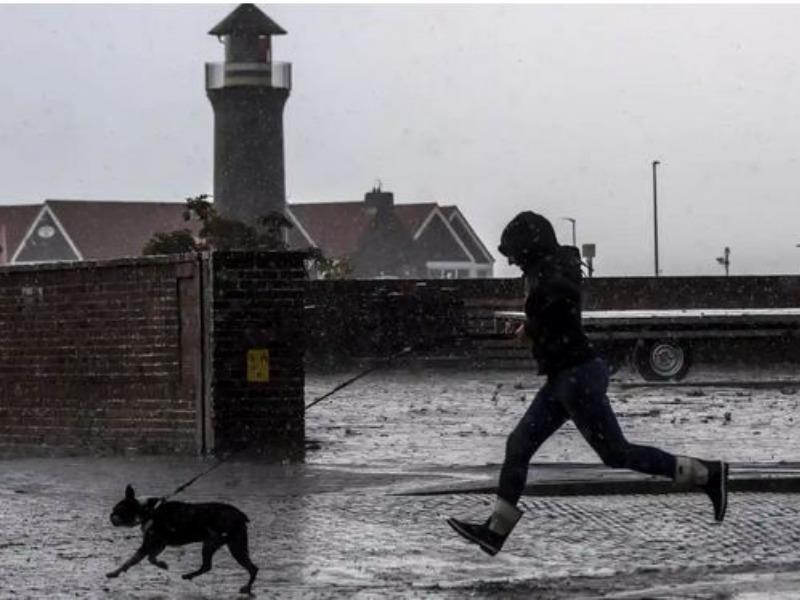 Đức sắp ra luật buộc dắt chó đi dạo hai lần trong ngày - ảnh 1