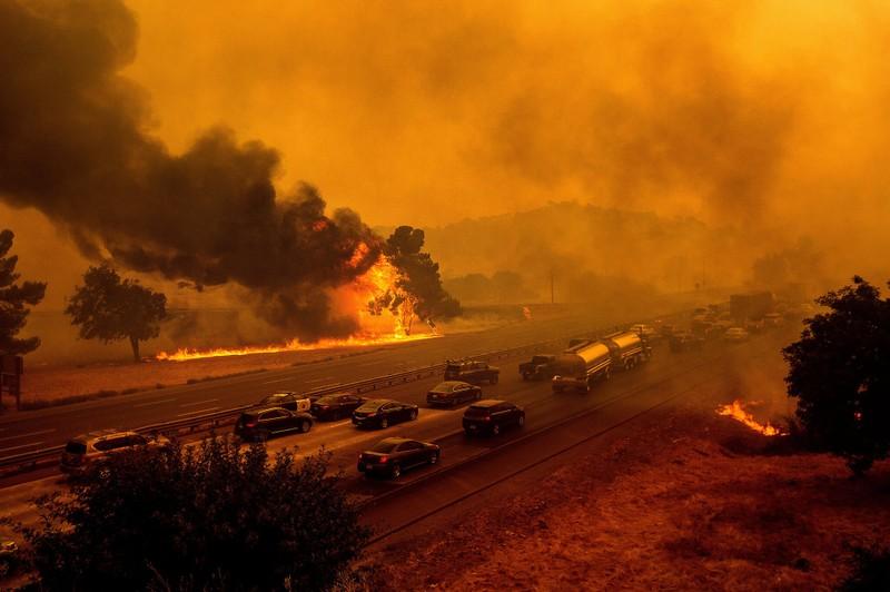 Bé trai ôm chó cưng thiệt mạng trong đám cháy ở California  - ảnh 2