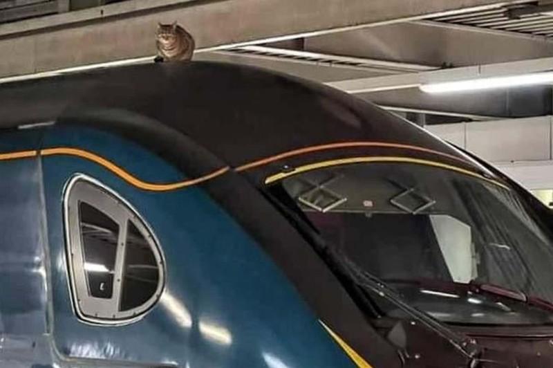 Tàu điện ngầm hoãn giờ chạy vì mèo lên nóc tàu nằm ngủ - ảnh 1