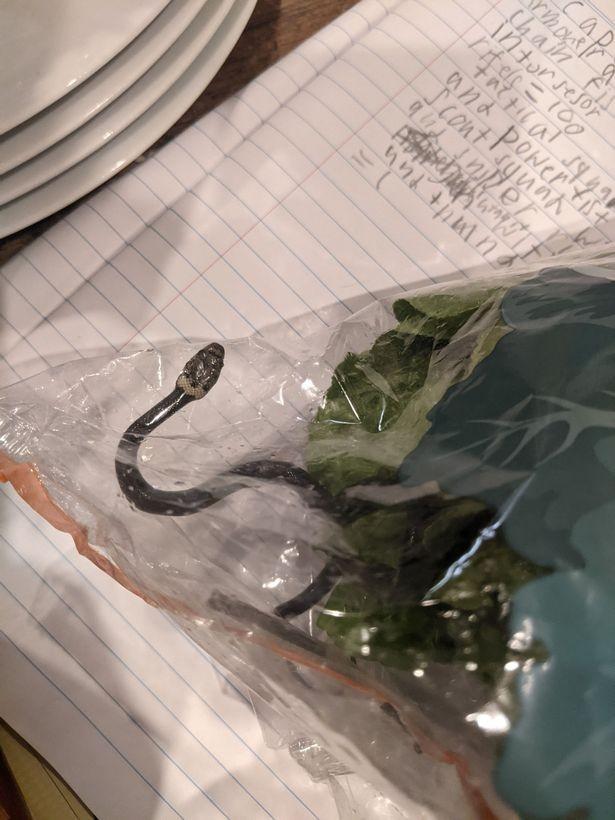 Hoảng hồn thấy rắn cực độc trong gói xà lách mua ở siêu thị - ảnh 1