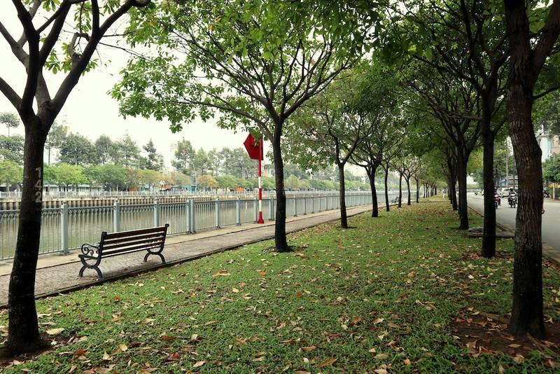 Ngắm lá lộc vừng vàng rộ cuối mùa ở Sài Gòn - ảnh 4