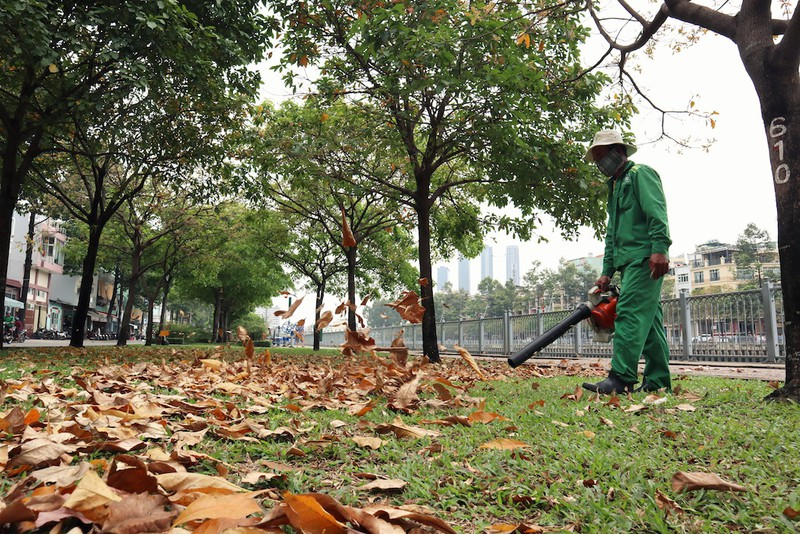 Ngắm lá lộc vừng vàng rộ cuối mùa ở Sài Gòn - ảnh 7