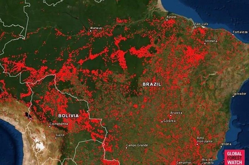 Cháy rừng Amazon lọt top Google Trends tuần qua - ảnh 3