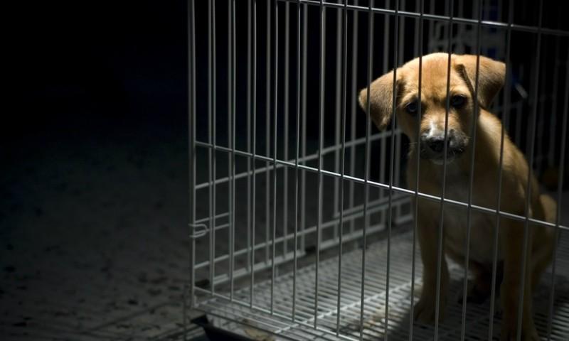 Tổng thống Hàn Quốc: Đã đến lúc cân nhắc cấm thịt chó - ảnh 1