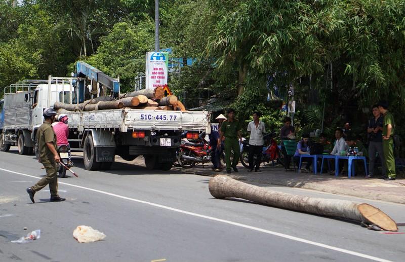 Thân cây dừa rơi khỏi cần cẩu đè thiếu niên 15 tuổi - ảnh 1