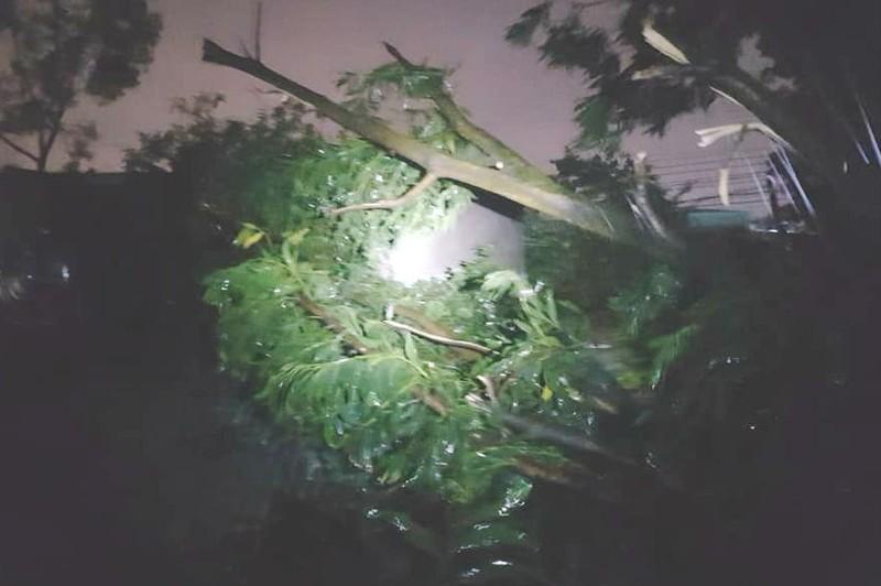 Đồng Nai: Gió lốc, cây bật gốc đè nhà dân trong đêm - ảnh 1