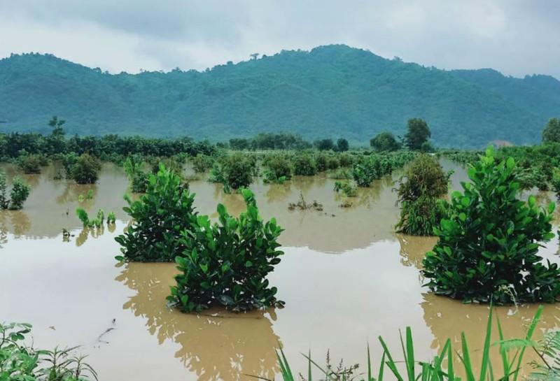 Những hình ảnh ngập lũ tại tỉnh Đồng Nai - ảnh 5